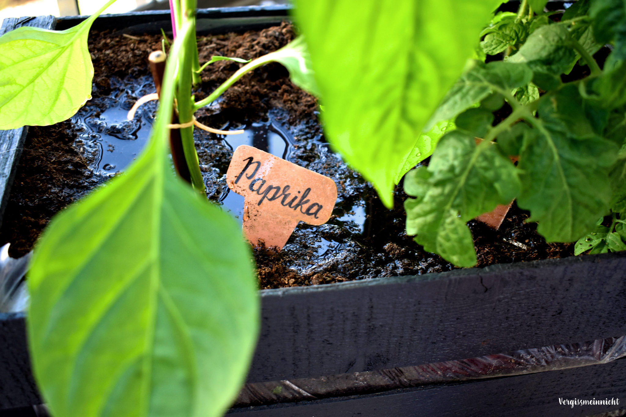 gem se richtig d ngen wie und warum erf hrst du hier. Black Bedroom Furniture Sets. Home Design Ideas